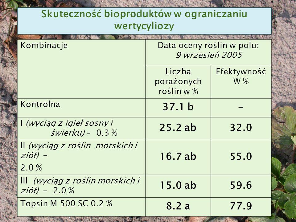 KombinacjeData oceny roślin w polu: 9 wrzesień 2005 Liczba porażonych roślin w % Efektywność W % Kontrolna 37.1 b- I (wyciąg z igieł sosny i świerku) - 0.3 % 25.2 ab32.0 II (wyciąg z roślin morskich i ziół) - 2.0 % 16.7 ab55.0 III (wyciąg z roślin morskich i ziół) - 2.0 % 15.0 ab59.6 Topsin M 500 SC 0.2 % 8.2 a77.9 Skuteczność bioproduktów w ograniczaniu wertycyliozy