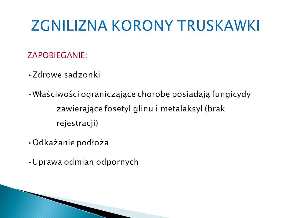 ZAPOBIEGANIE: Zdrowe sadzonki Właściwości ograniczające chorobę posiadają fungicydy zawierające fosetyl glinu i metalaksyl (brak rejestracji) Odkażanie podłoża Uprawa odmian odpornych