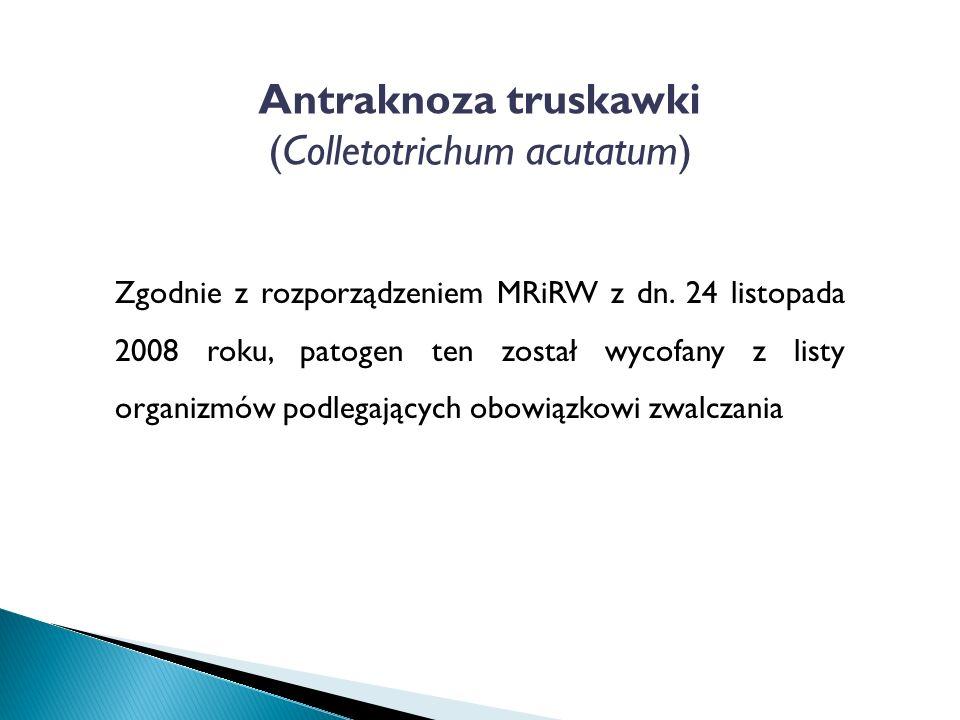 Antraknoza truskawki (Colletotrichum acutatum) Zgodnie z rozporządzeniem MRiRW z dn.