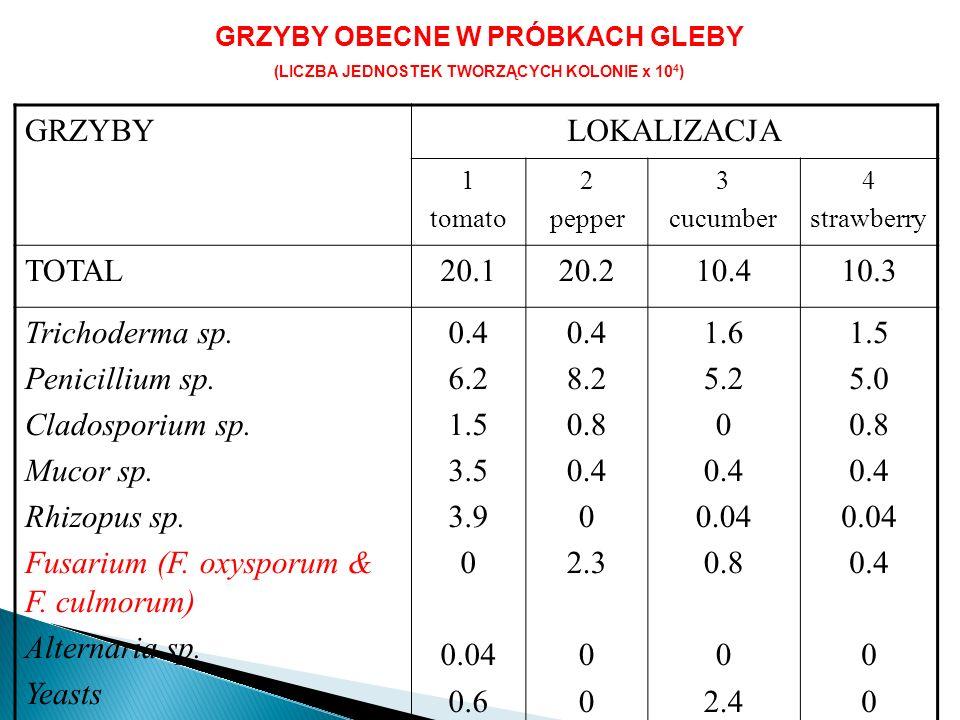 GRZYBY OBECNE W PRÓBKACH GLEBY (LICZBA JEDNOSTEK TWORZĄCYCH KOLONIE x 10 4 ) GRZYBYLOKALIZACJA 1 tomato 2 pepper 3 cucumber 4 strawberry TOTAL20.120.210.410.3 Trichoderma sp.