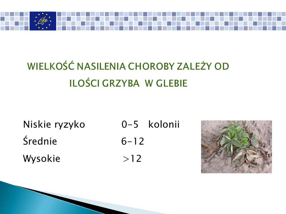 Niskie ryzyko 0-5 kolonii Średnie 6-12 Wysokie >12 WIELKOŚĆ NASILENIA CHOROBY ZALEŻY OD ILOŚCI GRZYBA W GLEBIE