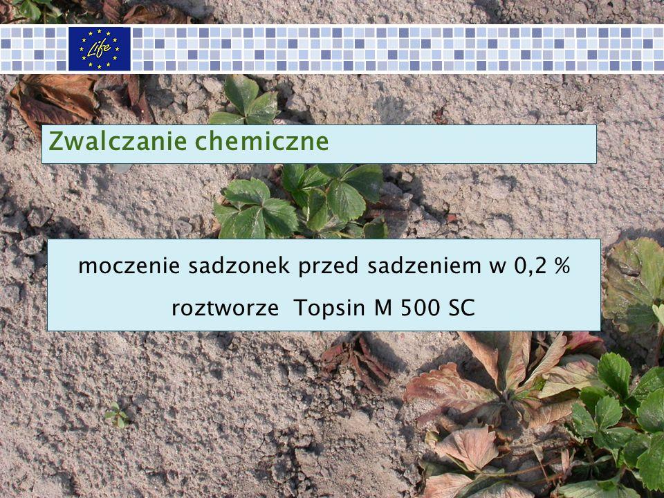 moczenie sadzonek przed sadzeniem w 0,2 % roztworze Topsin M 500 SC Zwalczanie chemiczne