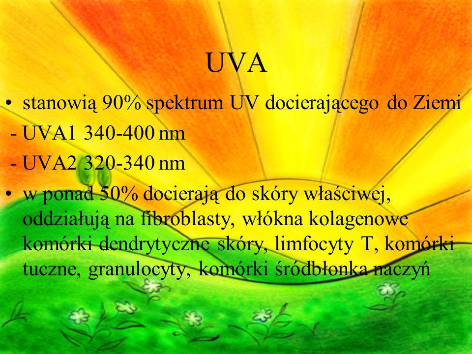 UVA stanowią 90% spektrum UV docierającego do Ziemi - UVA1 340-400 nm - UVA2 320-340 nm w ponad 50% docierają do skóry właściwej, oddziałują na fibroblasty, włókna kolagenowe komórki dendrytyczne skóry, limfocyty T, komórki tuczne, granulocyty, komórki śródbłonka naczyń