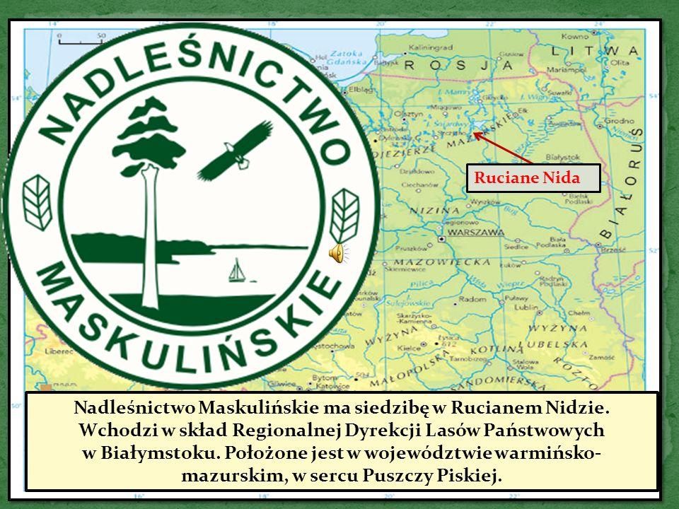 Ruciane Nida Nadleśnictwo Maskulińskie ma siedzibę w Rucianem Nidzie.