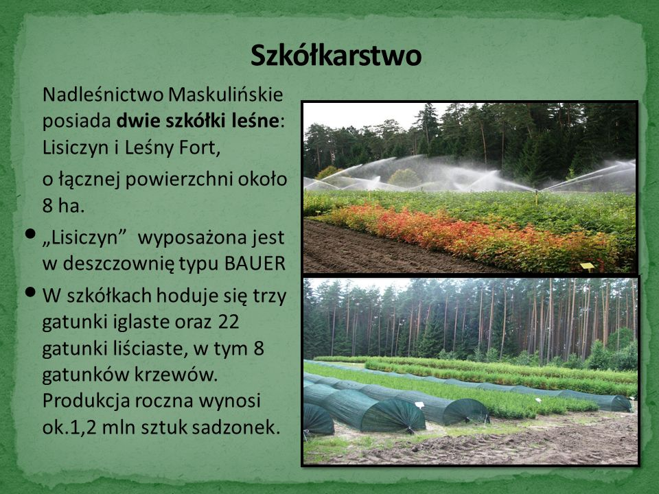 Nadleśnictwo Maskulińskie posiada dwie szkółki leśne: Lisiczyn i Leśny Fort, o łącznej powierzchni około 8 ha.