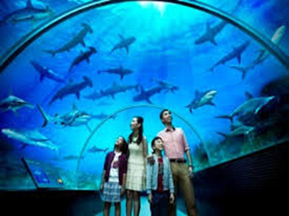 Przemysł turystyczny to przedsiębiorstwa i obiekty oferujące urządzenia i usługi dla turystów.