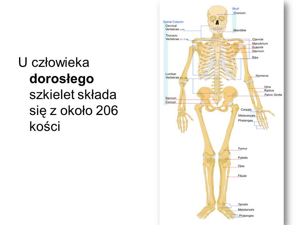 ZŁAMANIE (fractura) to całkowite przerwanie ciągłości kości.