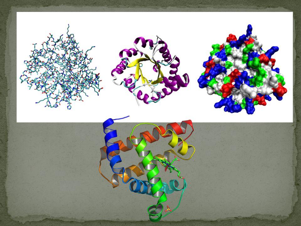 Zsyntetyzowany w komórce łańcuch białkowy przypomina unoszącą się swobodnie w roztworze nitkę , która może przyjąć dowolny kształt (w biofizyce nazywa się to kłębkiem statystycznym), ale ulega procesowi tzw.