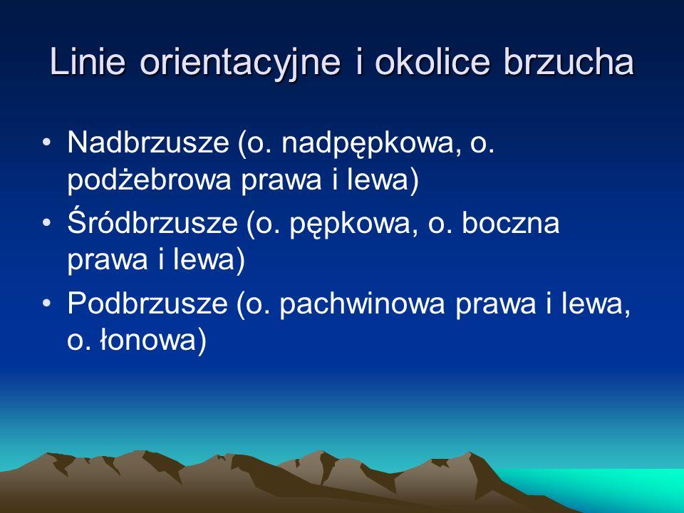 Linie orientacyjne i okolice brzucha Nadbrzusze (o.
