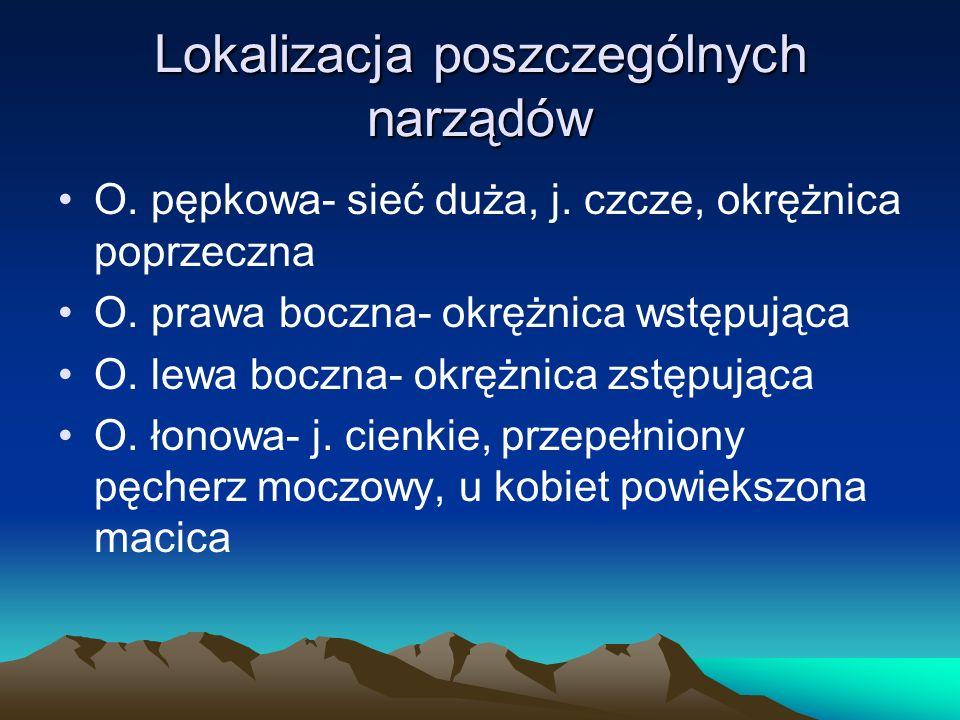 Lokalizacja poszczególnych narządów O. pępkowa- sieć duża, j.