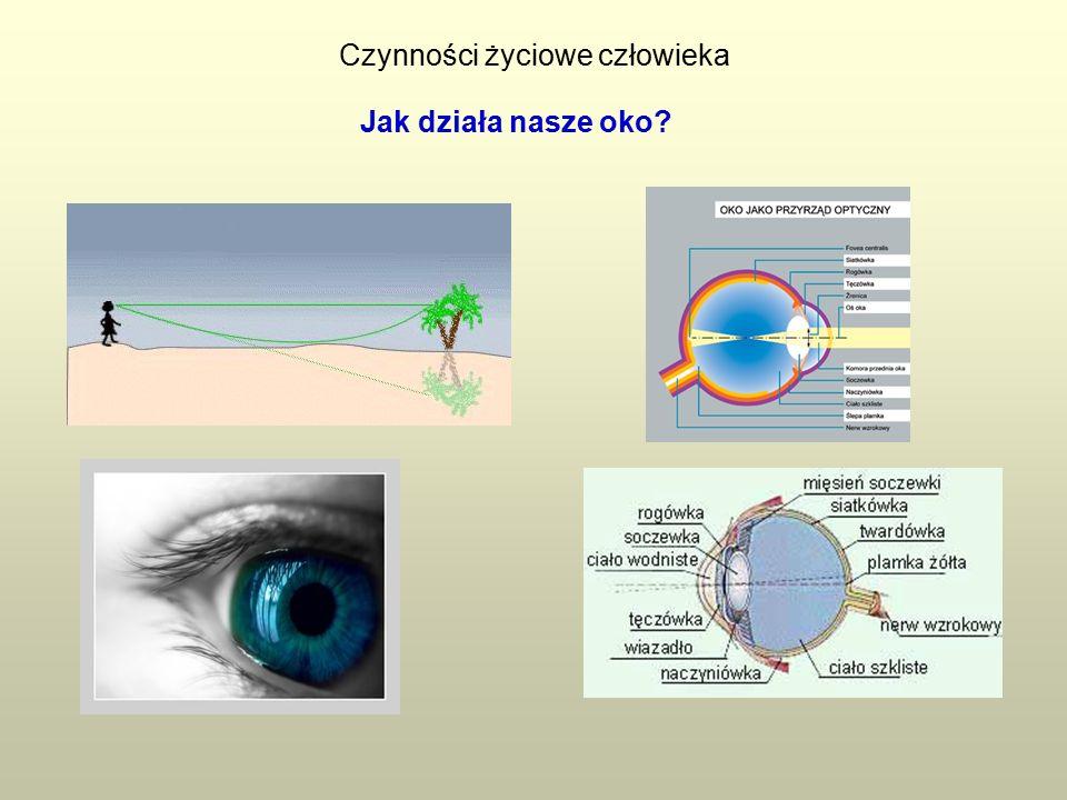 Czynności życiowe człowieka Jak działa nasze oko