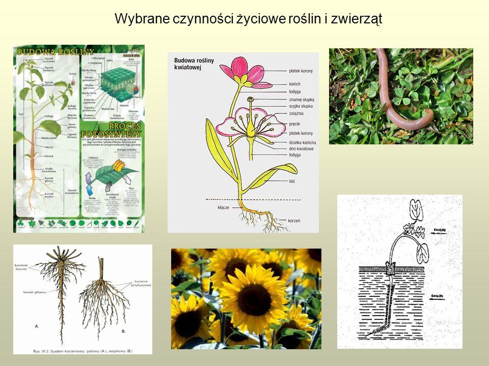 Wybrane czynności życiowe roślin i zwierząt
