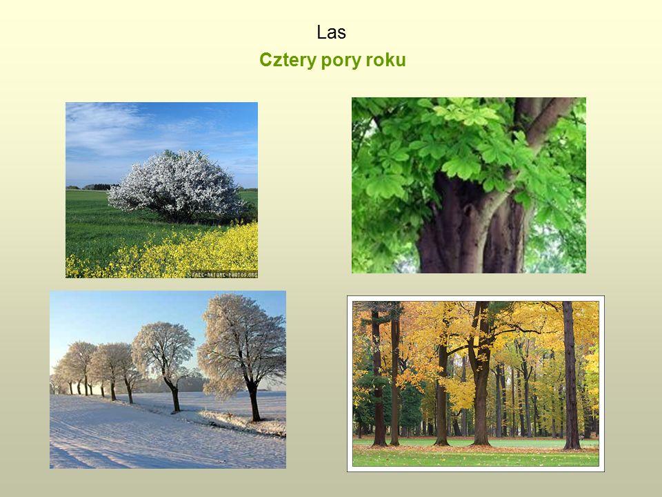 Las Cztery pory roku