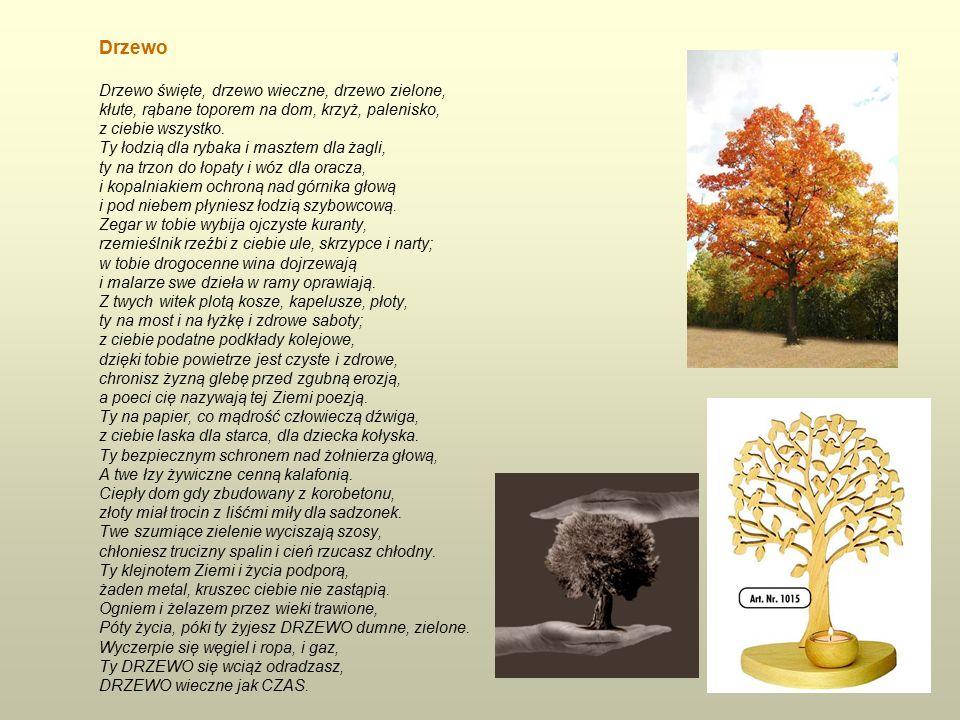 Drzewo Drzewo święte, drzewo wieczne, drzewo zielone, kłute, rąbane toporem na dom, krzyż, palenisko, z ciebie wszystko.