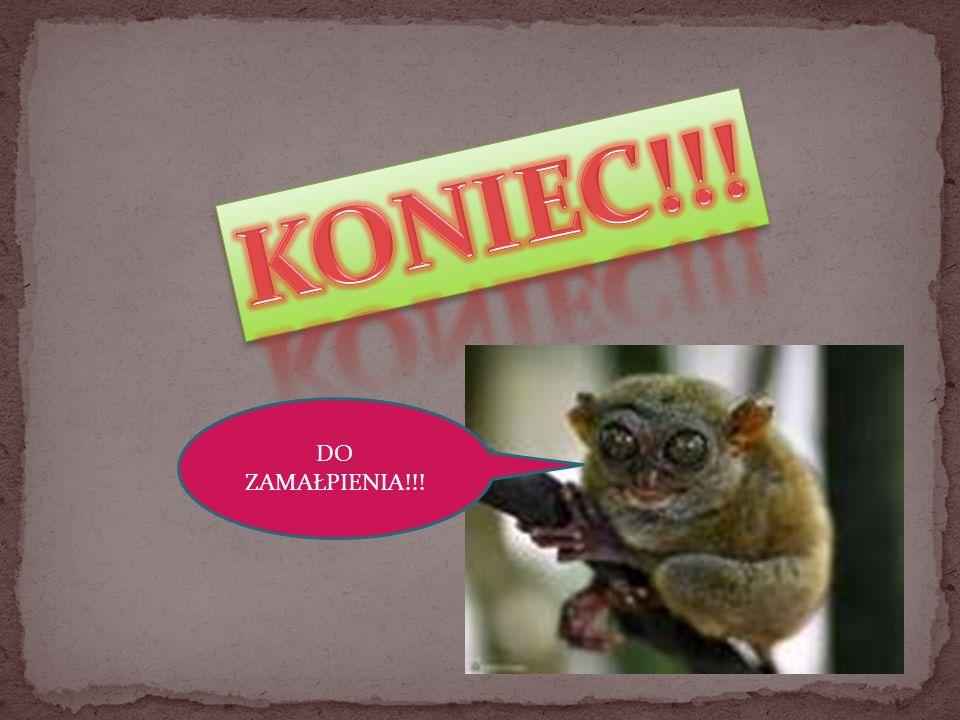 national-geographik.pl ulubiency.wp.pl aledycha.pl kanalfilmowy.eu familie.pl pardon.pl polskatimes.pl racjonalistablog.pl afrykańskie-safari.onet.pl itd.