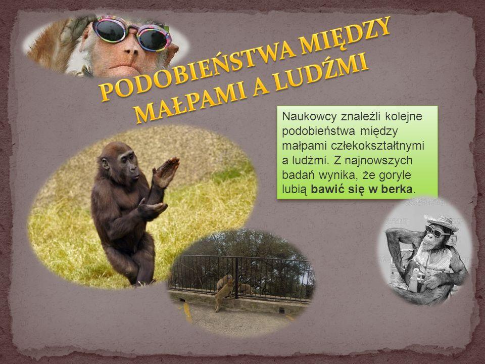 Ciekawski George Małpy w kosmosie Mój kumpel z sali gimnastycznej Kung Fu Panda Pippi Langstrumpf Tarzan Magilla Gorilla Planeta Małp