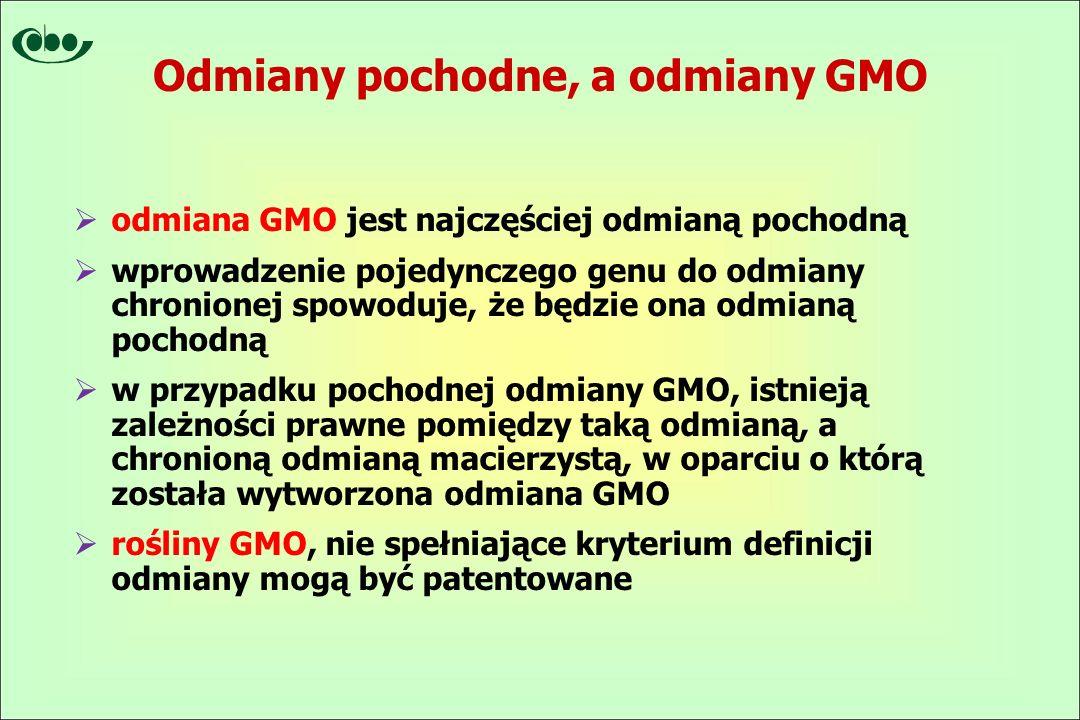 Odmiany pochodne, a odmiany GMO  odmiana GMO jest najczęściej odmianą pochodną  wprowadzenie pojedynczego genu do odmiany chronionej spowoduje, że będzie ona odmianą pochodną  w przypadku pochodnej odmiany GMO, istnieją zależności prawne pomiędzy taką odmianą, a chronioną odmianą macierzystą, w oparciu o którą została wytworzona odmiana GMO  rośliny GMO, nie spełniające kryterium definicji odmiany mogą być patentowane