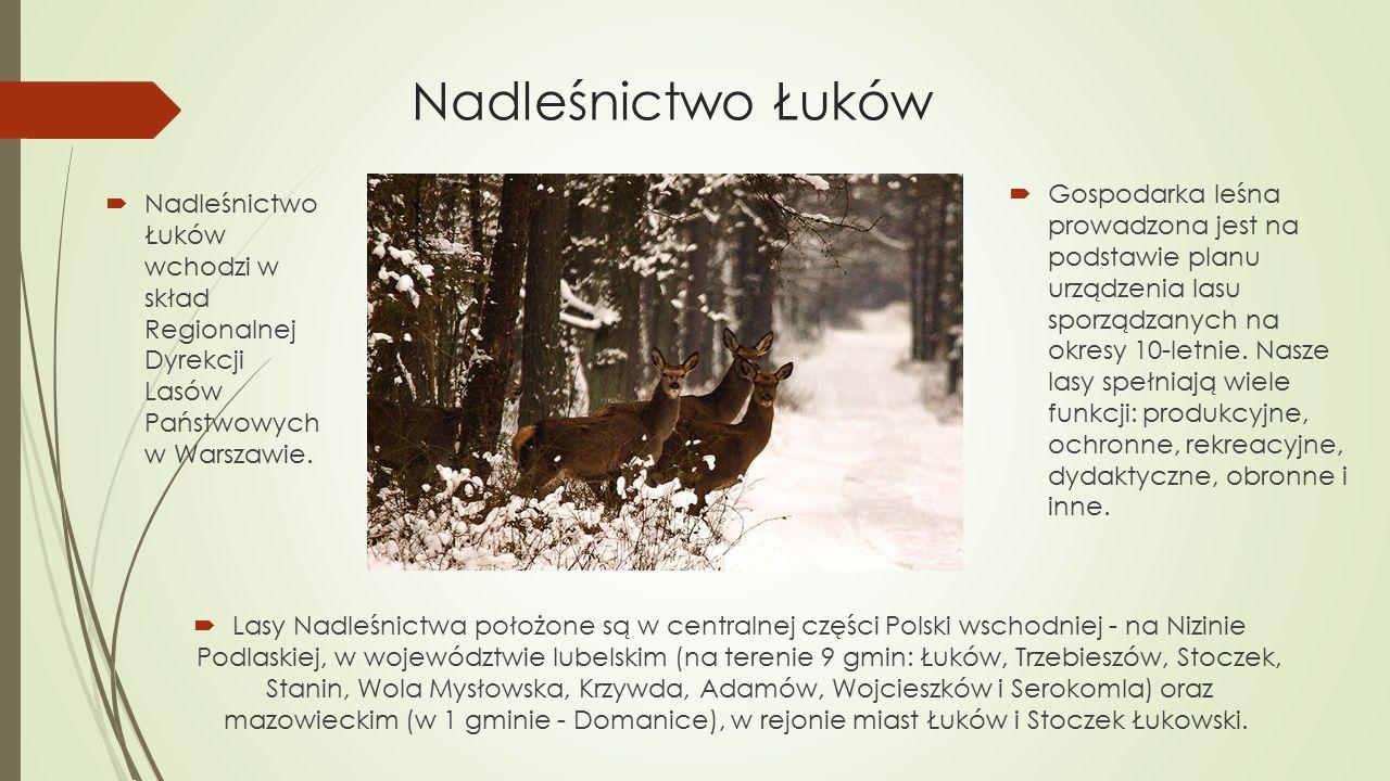 Nadleśnictwo Łuków  Nadleśnictwo Łuków wchodzi w skład Regionalnej Dyrekcji Lasów Państwowych w Warszawie.  Gospodarka leśna prowadzona jest na pods