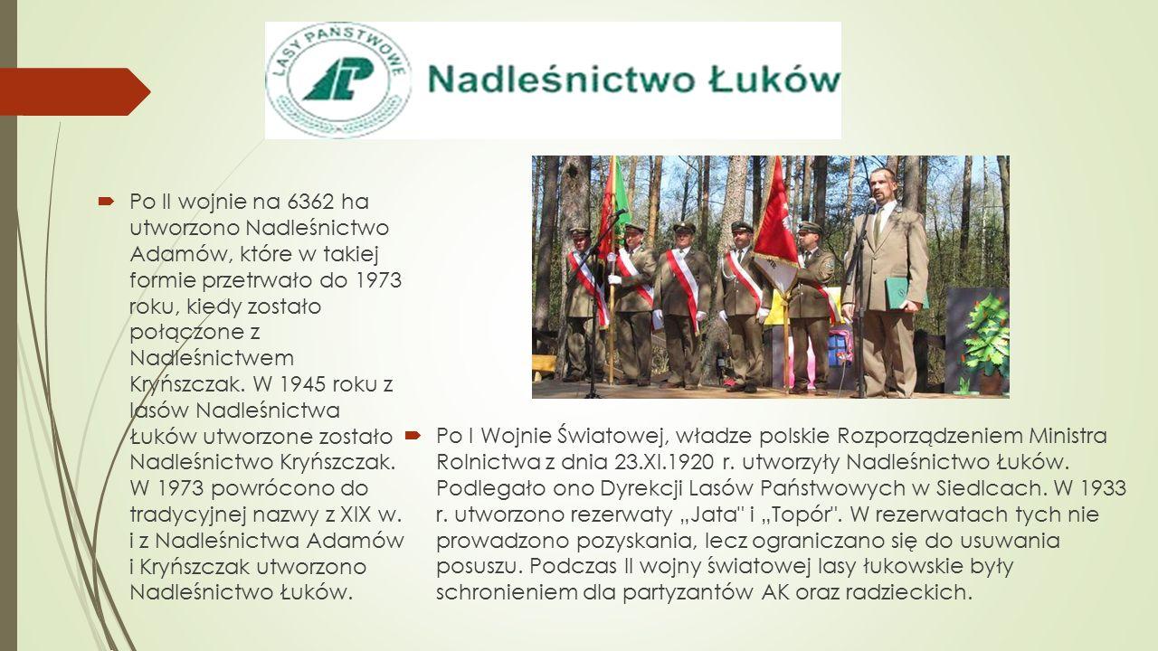  Po I Wojnie Światowej, władze polskie Rozporządzeniem Ministra Rolnictwa z dnia 23.XI.1920 r. utworzyły Nadleśnictwo Łuków. Podlegało ono Dyrekcji L