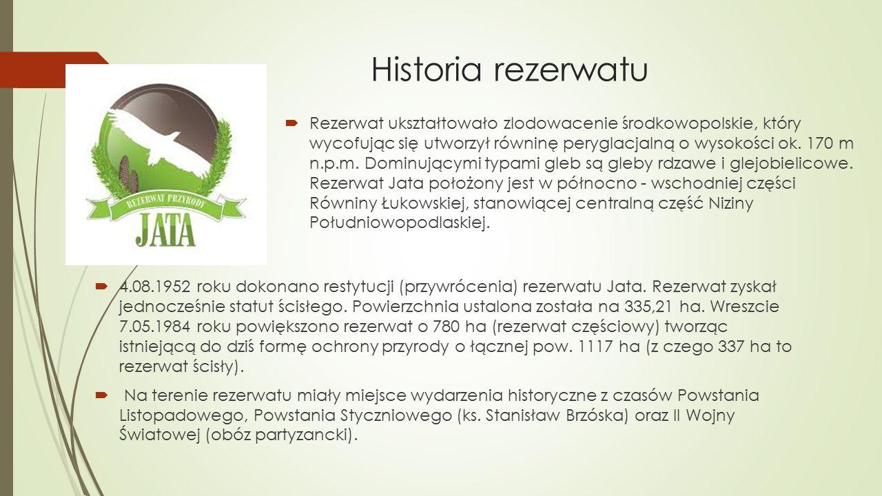 Historia rezerwatu  4.08.1952 roku dokonano restytucji (przywrócenia) rezerwatu Jata. Rezerwat zyskał jednocześnie statut ścisłego. Powierzchnia usta