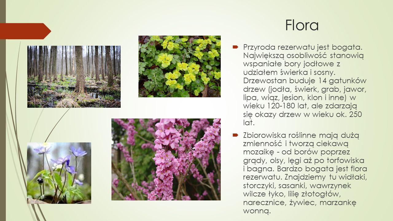 Flora  Przyroda rezerwatu jest bogata. Największą osobliwość stanowią wspaniałe bory jodłowe z udziałem świerka i sosny. Drzewostan buduje 14 gatunkó