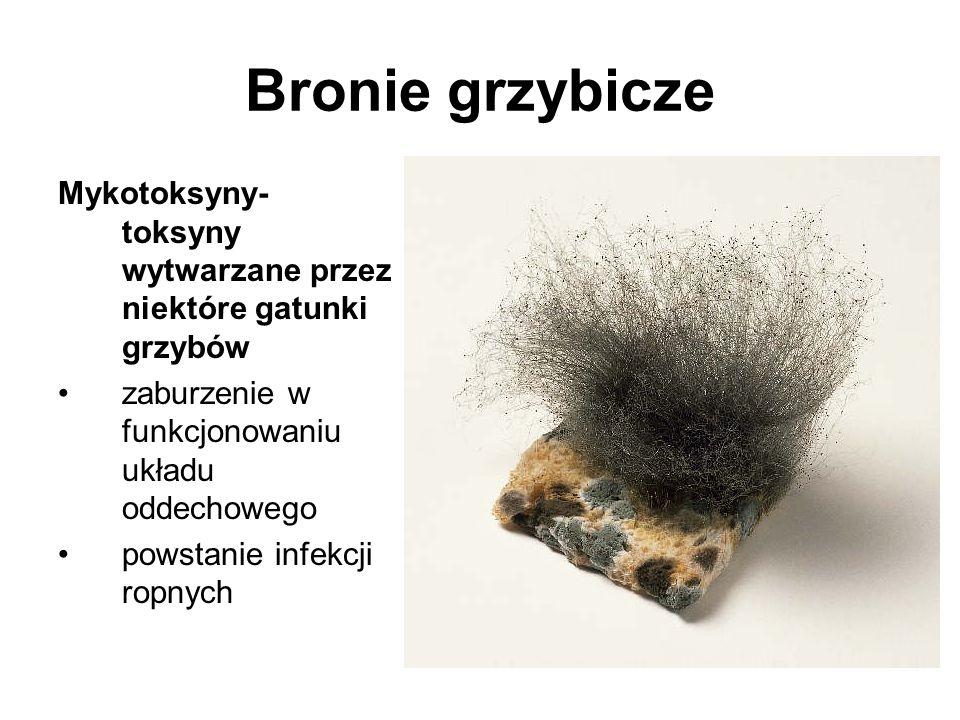 Bronie grzybicze Mykotoksyny- toksyny wytwarzane przez niektóre gatunki grzybów zaburzenie w funkcjonowaniu układu oddechowego powstanie infekcji ropnych