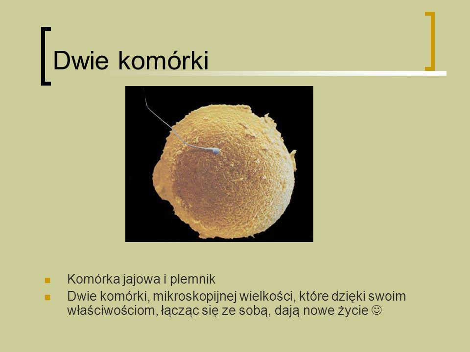 Dwie komórki Komórka jajowa i plemnik Dwie komórki, mikroskopijnej wielkości, które dzięki swoim właściwościom, łącząc się ze sobą, dają nowe życie