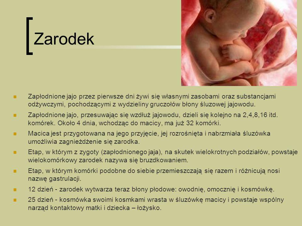 Niebezpieczeństwa w pierwszym okresie ciąży Często przyszła matka nie wie jeszcze, iż jest w ciąży, tymczasem: Zarodek we wczesnym stadium swojego rozwoju jest bardzo wrażliwy na wpływ czynników zewnętrznych.