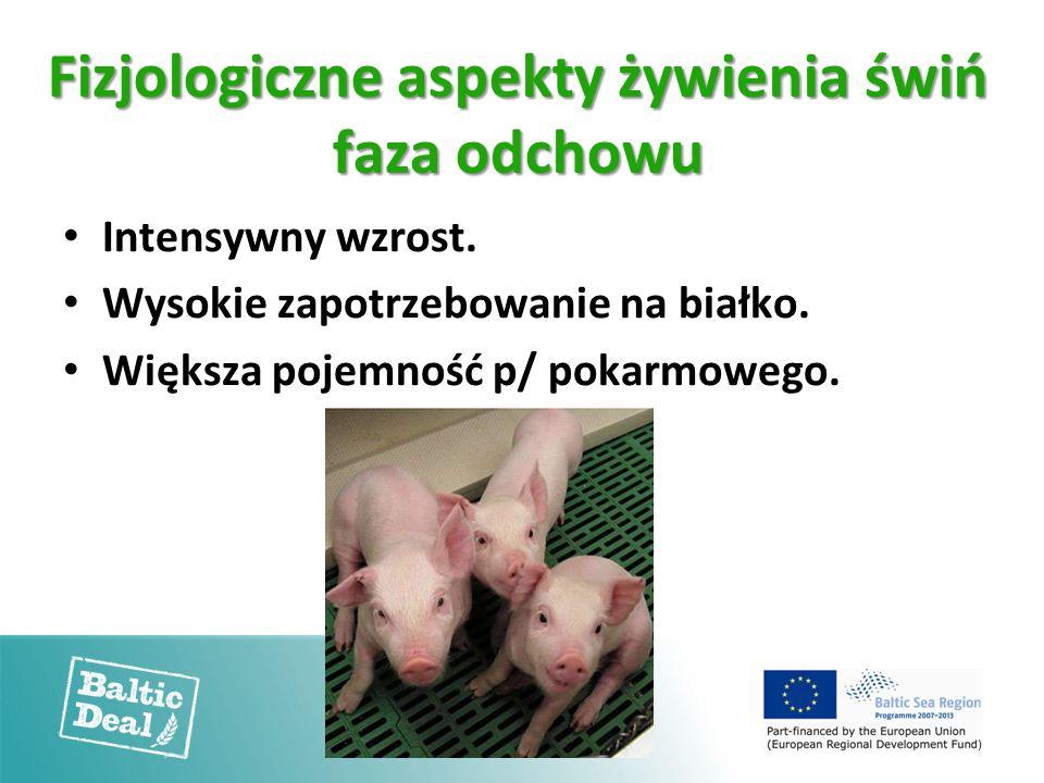 Fizjologiczne aspekty żywienia świń faza odchowu Intensywny wzrost. Wysokie zapotrzebowanie na białko. Większa pojemność p/ pokarmowego.