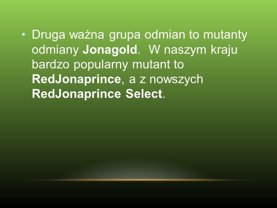 Druga ważna grupa odmian to mutanty odmiany Jonagold. W naszym kraju bardzo popularny mutant to RedJonaprince, a z nowszych RedJonaprince Select.
