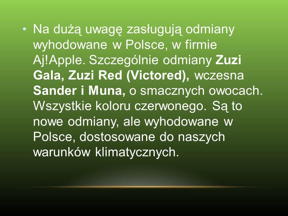 Na dużą uwagę zasługują odmiany wyhodowane w Polsce, w firmie Aj!Apple. Szczególnie odmiany Zuzi Gala, Zuzi Red (Victored), wczesna Sander i Muna, o s