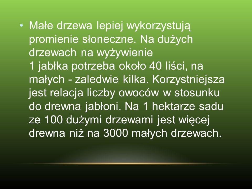 Spada zainteresowanie odmianą Golden Delicious w krajach Zachodniej Europy, USA i także w Polsce.