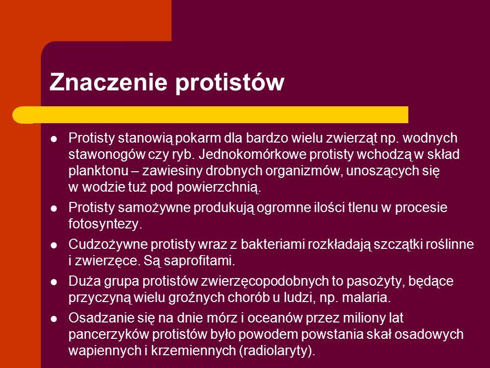 Znaczenie protistów Protisty stanowią pokarm dla bardzo wielu zwierząt np. wodnych stawonogów czy ryb. Jednokomórkowe protisty wchodzą w skład plankto