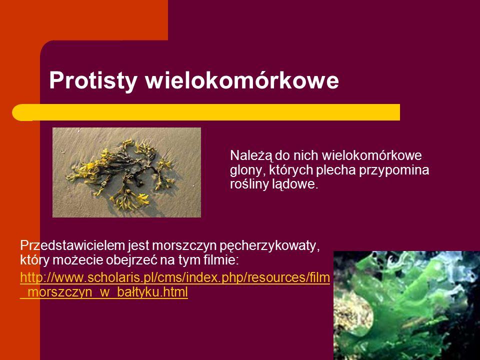 Protisty wielokomórkowe Przedstawicielem jest morszczyn pęcherzykowaty, który możecie obejrzeć na tym filmie: http://www.scholaris.pl/cms/index.php/re