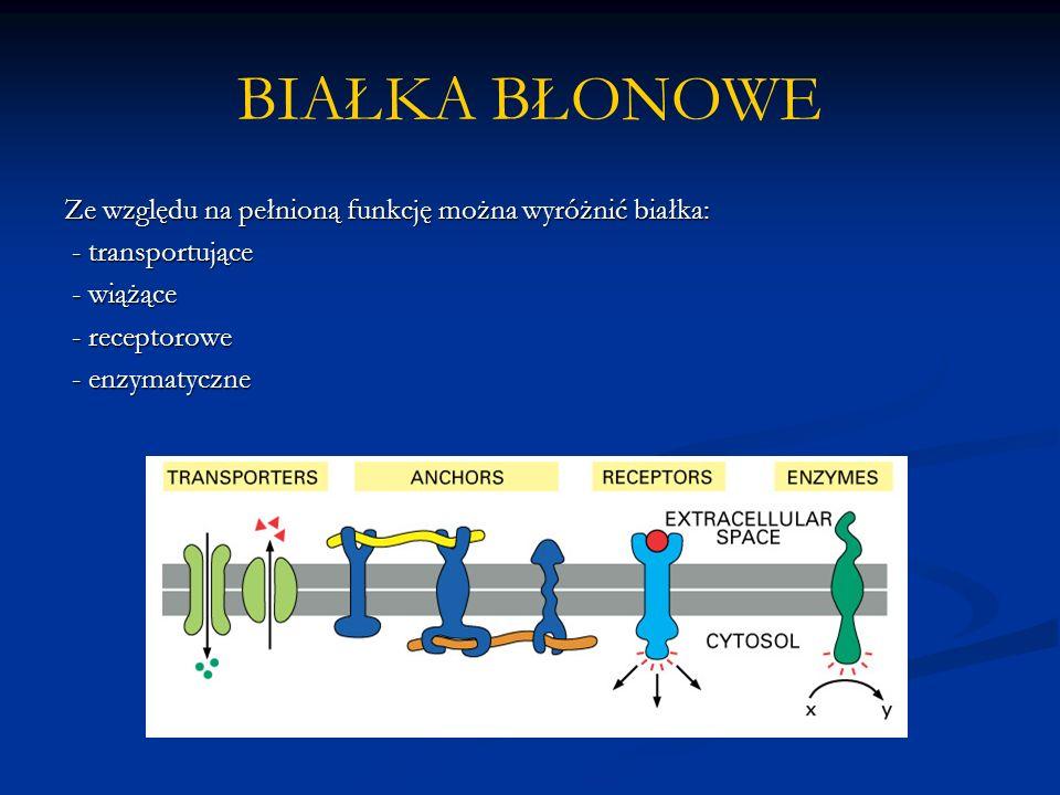 BIAŁKA BŁONOWE Ze względu na pełnioną funkcję można wyróżnić białka: - transportujące - transportujące - wiążące - wiążące - receptorowe - receptorowe - enzymatyczne - enzymatyczne