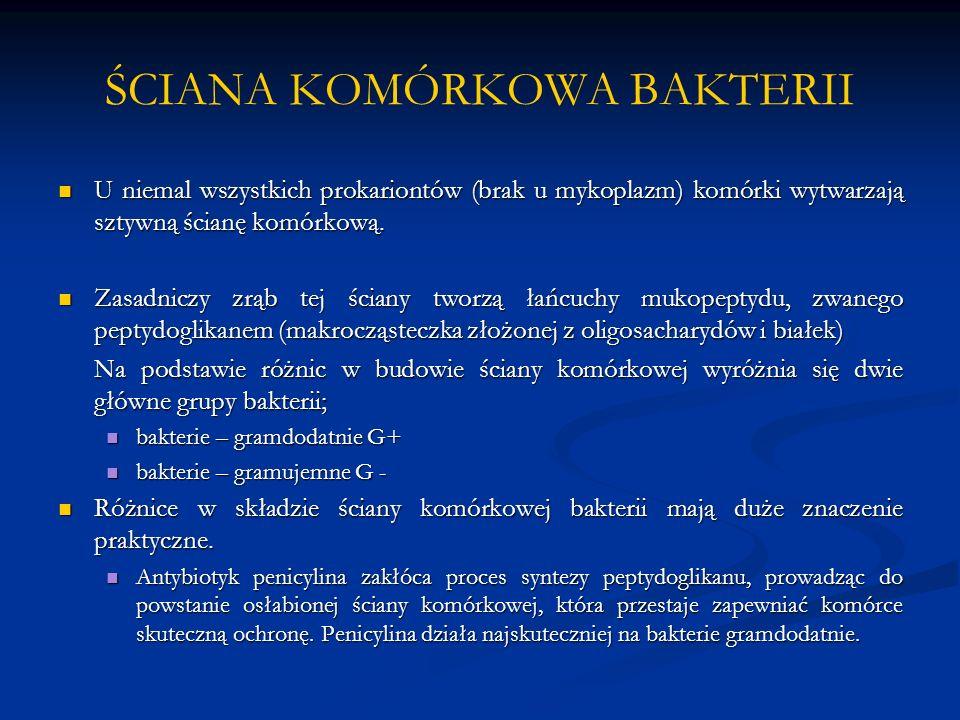 ŚCIANA KOMÓRKOWA BAKTERII U niemal wszystkich prokariontów (brak u mykoplazm) komórki wytwarzają sztywną ścianę komórkową. U niemal wszystkich prokari