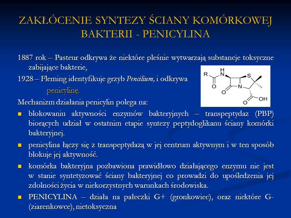 ZAKŁÓCENIE SYNTEZY ŚCIANY KOMÓRKOWEJ BAKTERII - PENICYLINA 1887 rok – Pasteur odkrywa że niektóre pleśnie wytwarzają substancje toksyczne zabijające bakterie, 1928 – Fleming identyfikuje grzyb Pencilium, i odkrywa penicylinę.