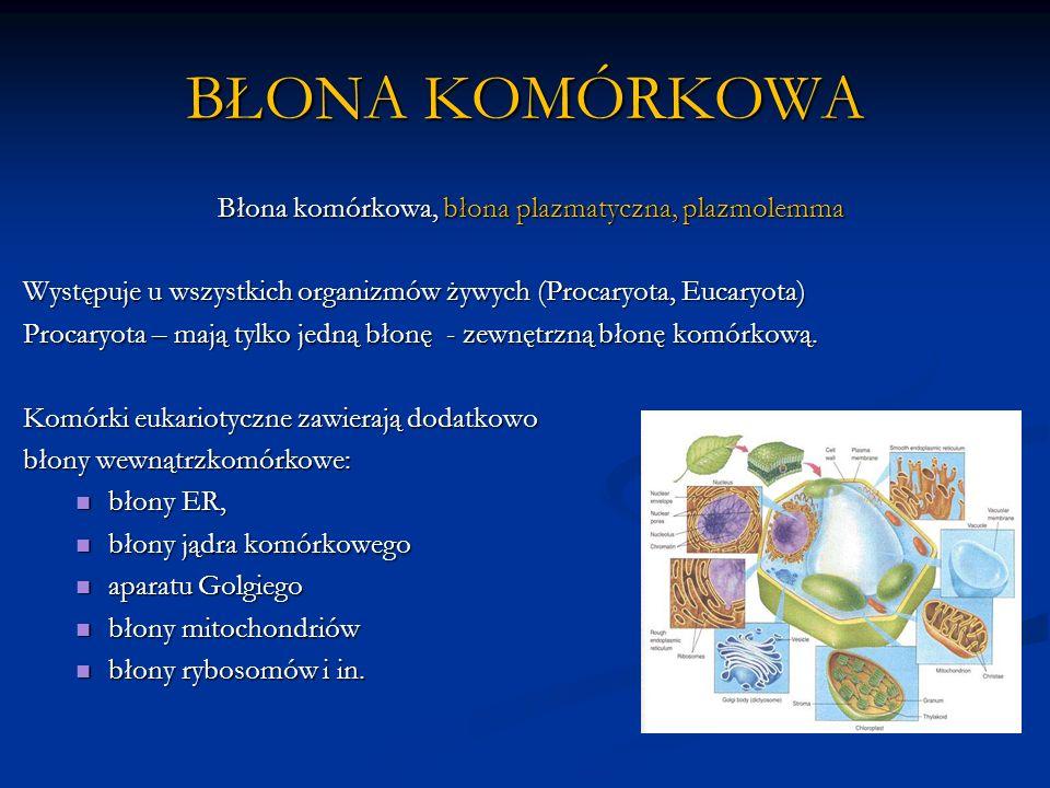BŁONA KOMÓRKOWA Błona komórkowa, błona plazmatyczna, plazmolemma Występuje u wszystkich organizmów żywych (Procaryota, Eucaryota) Procaryota – mają tylko jedną błonę - zewnętrzną błonę komórkową.