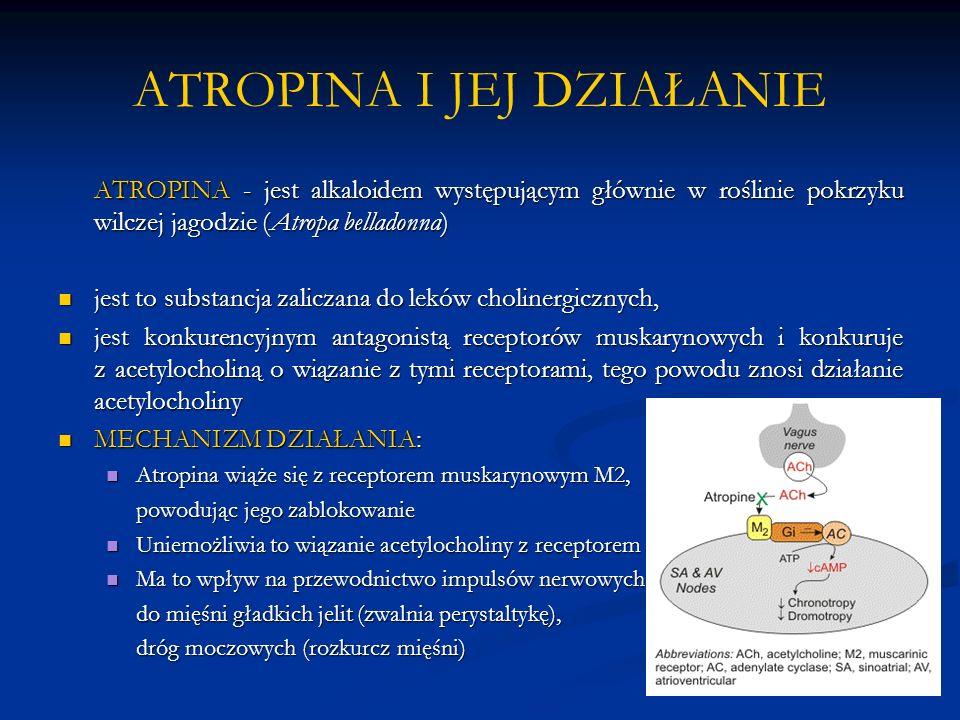 ATROPINA I JEJ DZIAŁANIE ATROPINA - jest alkaloidem występującym głównie w roślinie pokrzyku wilczej jagodzie (Atropa belladonna) jest to substancja zaliczana do leków cholinergicznych, jest to substancja zaliczana do leków cholinergicznych, jest konkurencyjnym antagonistą receptorów muskarynowych i konkuruje z acetylocholiną o wiązanie z tymi receptorami, tego powodu znosi działanie acetylocholiny jest konkurencyjnym antagonistą receptorów muskarynowych i konkuruje z acetylocholiną o wiązanie z tymi receptorami, tego powodu znosi działanie acetylocholiny MECHANIZM DZIAŁANIA: MECHANIZM DZIAŁANIA: Atropina wiąże się z receptorem muskarynowym M2, Atropina wiąże się z receptorem muskarynowym M2, powodując jego zablokowanie Uniemożliwia to wiązanie acetylocholiny z receptorem Uniemożliwia to wiązanie acetylocholiny z receptorem Ma to wpływ na przewodnictwo impulsów nerwowych Ma to wpływ na przewodnictwo impulsów nerwowych do mięśni gładkich jelit (zwalnia perystaltykę), dróg moczowych (rozkurcz mięśni)