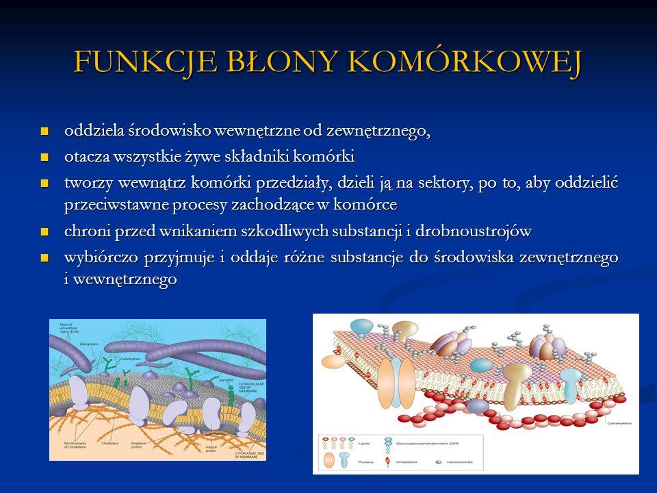 LEKI CHOLINERGICZNE I ANTYCHOLINERGICZNE Leki cholinergiczne i antycholinergiczne to leki działające na ośrodkowy OUN i obwodowy układ nerwowy.