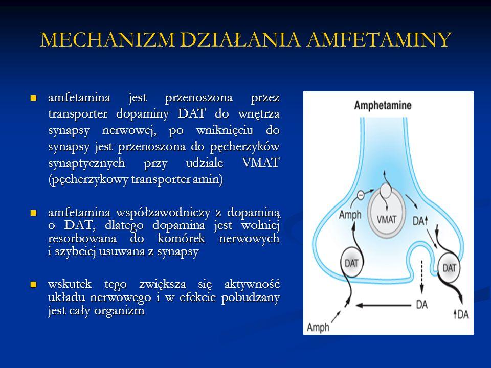 MECHANIZM DZIAŁANIA AMFETAMINY amfetamina jest przenoszona przez transporter dopaminy DAT do wnętrza synapsy nerwowej, po wniknięciu do synapsy jest przenoszona do pęcherzyków synaptycznych przy udziale VMAT (pęcherzykowy transporter amin) amfetamina jest przenoszona przez transporter dopaminy DAT do wnętrza synapsy nerwowej, po wniknięciu do synapsy jest przenoszona do pęcherzyków synaptycznych przy udziale VMAT (pęcherzykowy transporter amin) amfetamina współzawodniczy z dopaminą o DAT, dlatego dopamina jest wolniej resorbowana do komórek nerwowych i szybciej usuwana z synapsy amfetamina współzawodniczy z dopaminą o DAT, dlatego dopamina jest wolniej resorbowana do komórek nerwowych i szybciej usuwana z synapsy wskutek tego zwiększa się aktywność układu nerwowego i w efekcie pobudzany jest cały organizm wskutek tego zwiększa się aktywność układu nerwowego i w efekcie pobudzany jest cały organizm