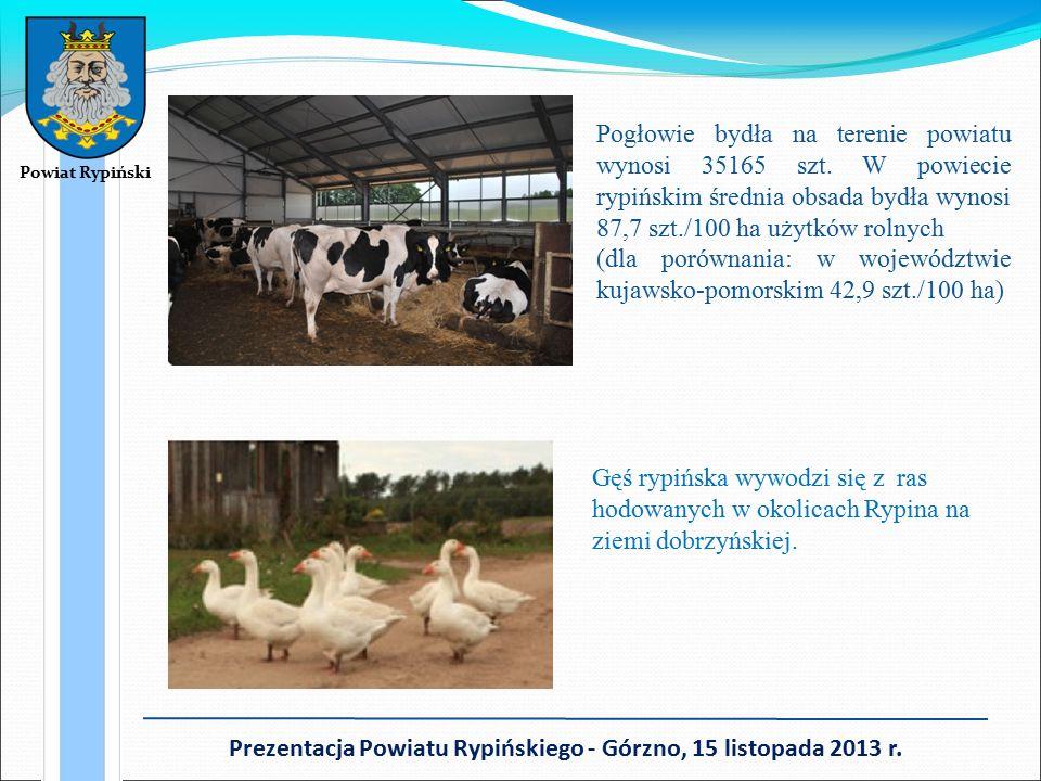 Pogłowie bydła na terenie powiatu wynosi 35165 szt.