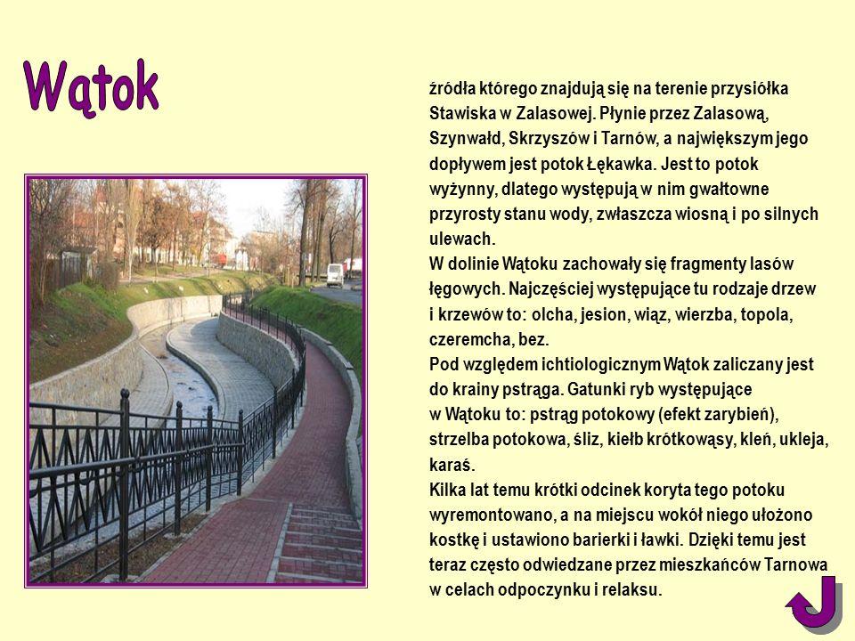 źródła którego znajdują się na terenie przysiółka Stawiska w Zalasowej.