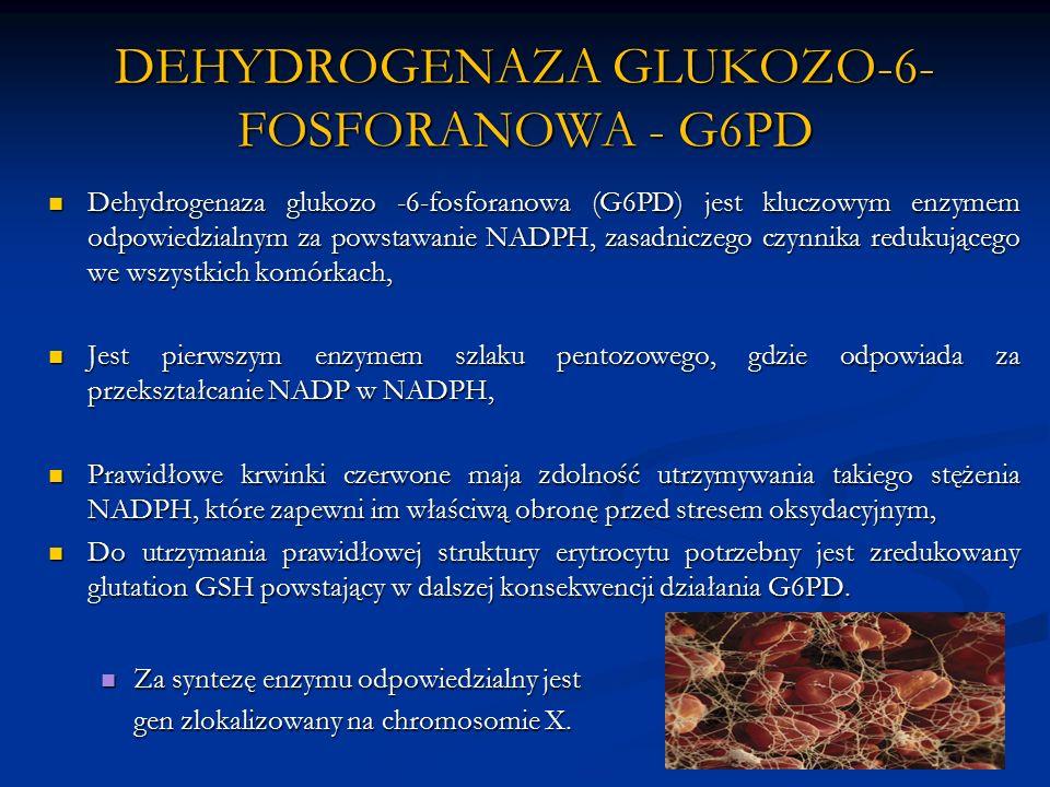 DEHYDROGENAZA GLUKOZO-6- FOSFORANOWA - G6PD Dehydrogenaza glukozo -6-fosforanowa (G6PD) jest kluczowym enzymem odpowiedzialnym za powstawanie NADPH, zasadniczego czynnika redukującego we wszystkich komórkach, Dehydrogenaza glukozo -6-fosforanowa (G6PD) jest kluczowym enzymem odpowiedzialnym za powstawanie NADPH, zasadniczego czynnika redukującego we wszystkich komórkach, Jest pierwszym enzymem szlaku pentozowego, gdzie odpowiada za przekształcanie NADP w NADPH, Jest pierwszym enzymem szlaku pentozowego, gdzie odpowiada za przekształcanie NADP w NADPH, Prawidłowe krwinki czerwone maja zdolność utrzymywania takiego stężenia NADPH, które zapewni im właściwą obronę przed stresem oksydacyjnym, Prawidłowe krwinki czerwone maja zdolność utrzymywania takiego stężenia NADPH, które zapewni im właściwą obronę przed stresem oksydacyjnym, Do utrzymania prawidłowej struktury erytrocytu potrzebny jest zredukowany glutation GSH powstający w dalszej konsekwencji działania G6PD.
