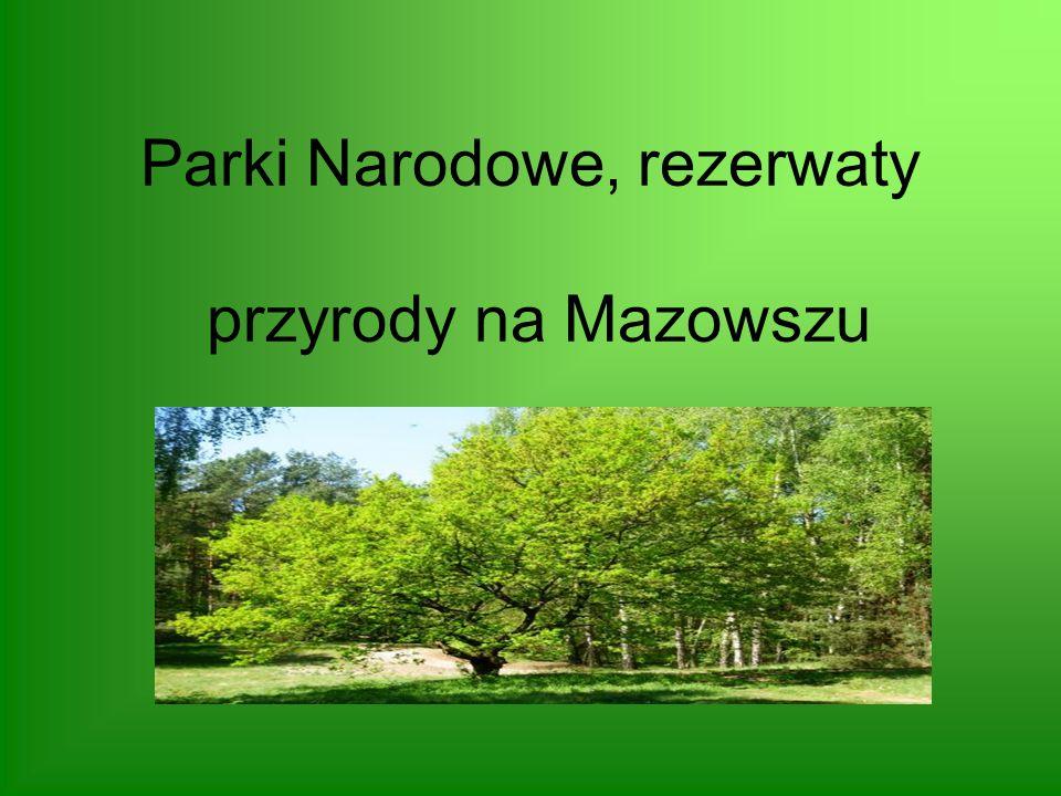 Rezerwat Żurawinowe Bagno Torfowiskowy rezerwat przyrody zlokalizowany w granicach wsi Regut, przy trasie Góra Kalwaria –Mińsk Mazowiecki, w gminie Celestynów (województwo mazowieckie).