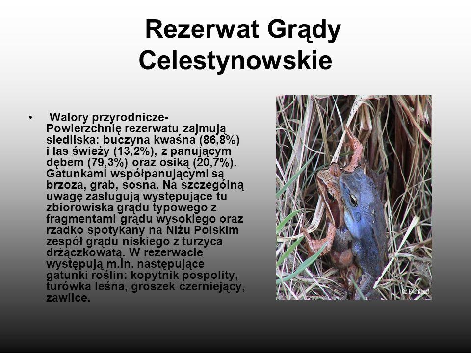 Rezerwat Grądy Celestynowskie leśny, częściowy rezerwat przyrody położony w gminie Celestynów, na północ od Celestynowa. Został powołany Zarządzeniem