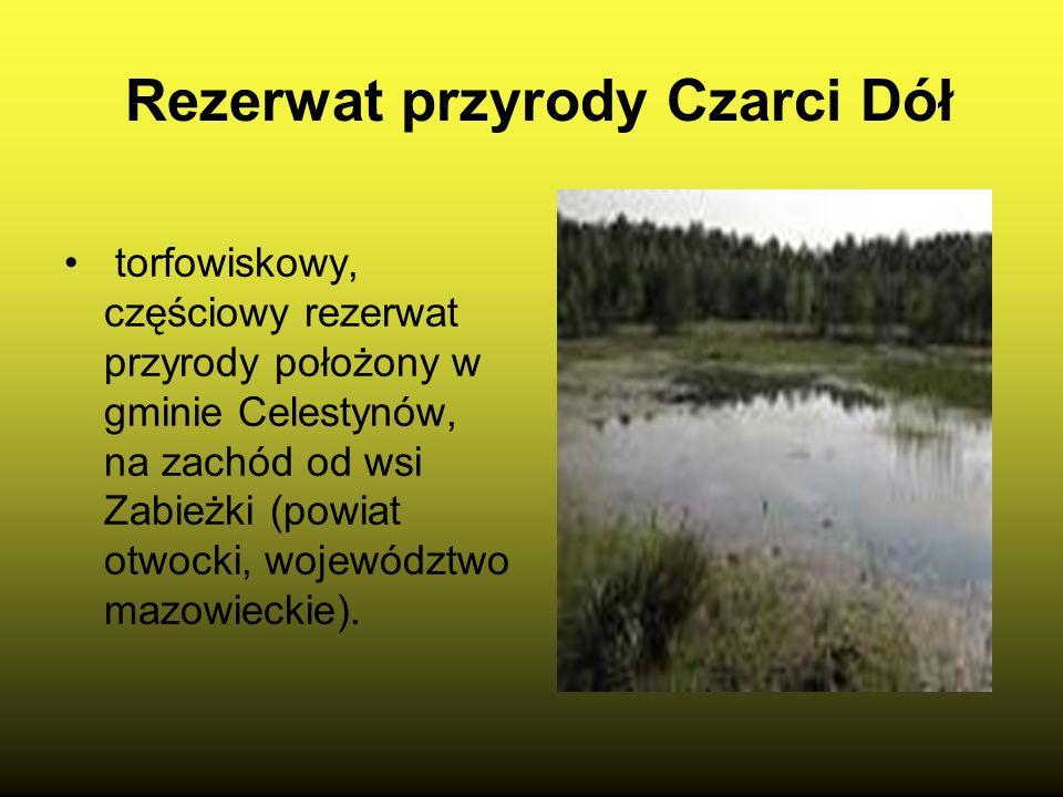 Rezerwat Grądy Celestynowskie Walory przyrodnicze- Powierzchnię rezerwatu zajmują siedliska: buczyna kwaśna (86,8%) i las świeży (13,2%), z panującym