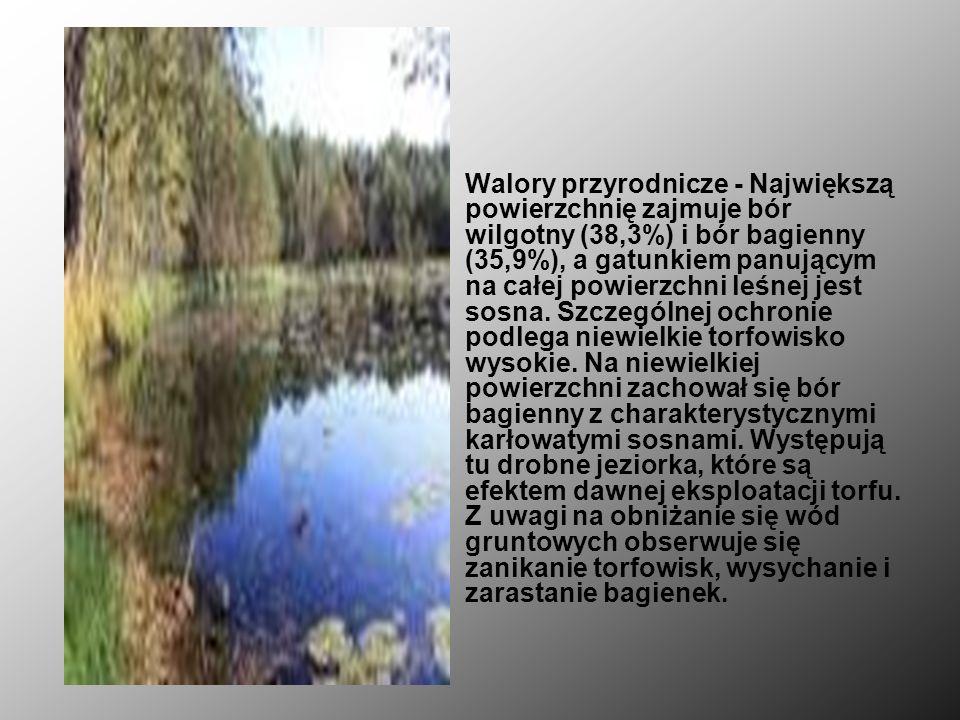 Rezerwat przyrody Czarci Dół torfowiskowy, częściowy rezerwat przyrody położony w gminie Celestynów, na zachód od wsi Zabieżki (powiat otwocki, wojewó