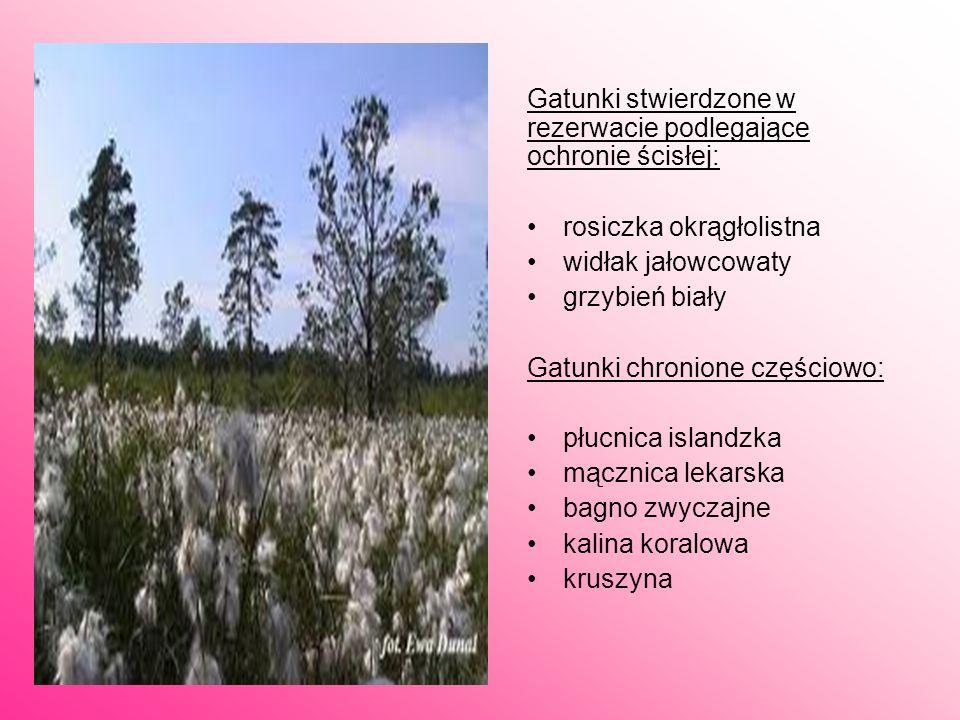 Rezerwat Szerokie Bagno rezerwat przyrody położony w gminie Osieck, na południowy wschód od wsi Zabieżki (województwo mazowieckie).Jest to rezerwat to