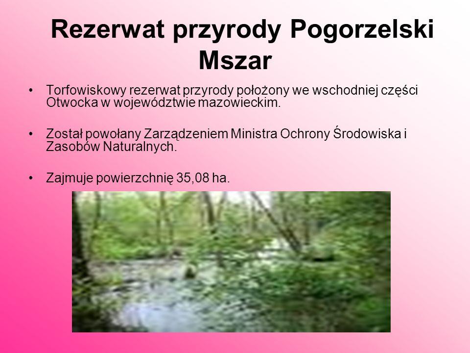 Gatunki stwierdzone w rezerwacie podlegające ochronie ścisłej: rosiczka okrągłolistna widłak jałowcowaty grzybień biały Gatunki chronione częściowo: p